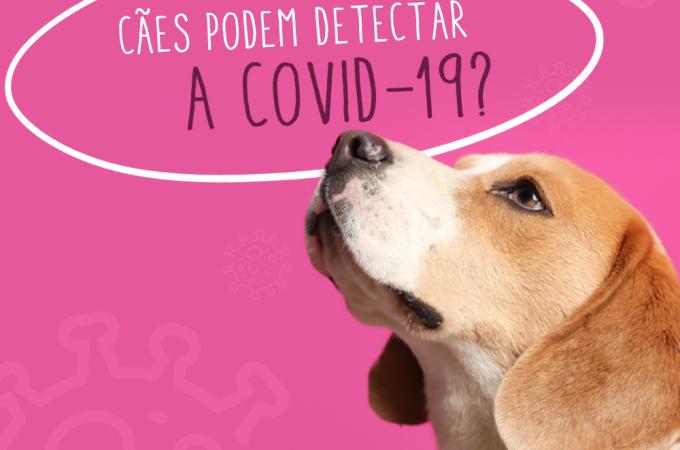 Cães podem detectar a COVID-19?