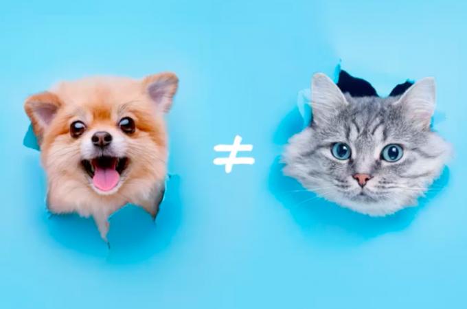 Petiscos para cães e gatos são iguais?